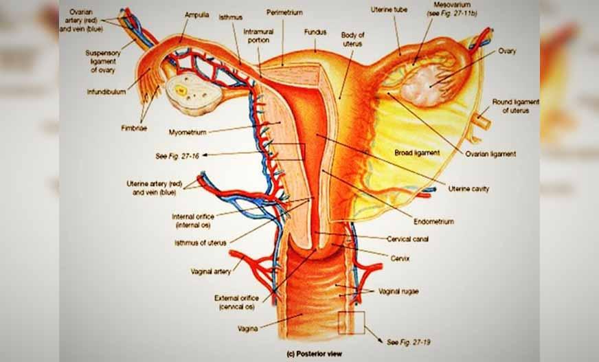 cara menjaga kesehatan alat reproduksi wanita dengan ...